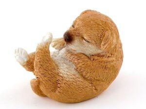 Miniature hundehvalp